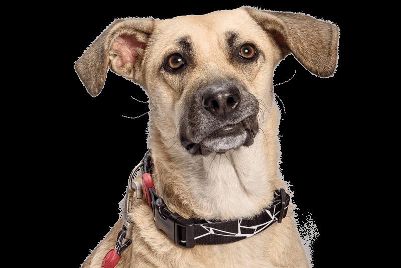 Morso® - Collare per cani | BROKEN SELF