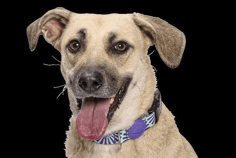 Morso® - Collare per cani | COLORED SUN