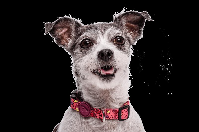Morso® - Collare per cani | PINK THINK