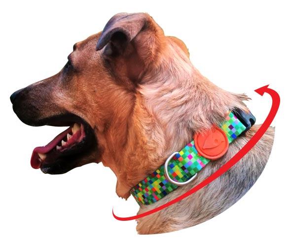 Morso® - Collari per cani Made in Italy